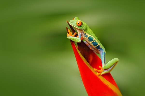 Eciuador Amazon, Frog on plant