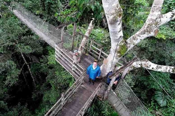 Canopy Walkway Amazon Jungle Package