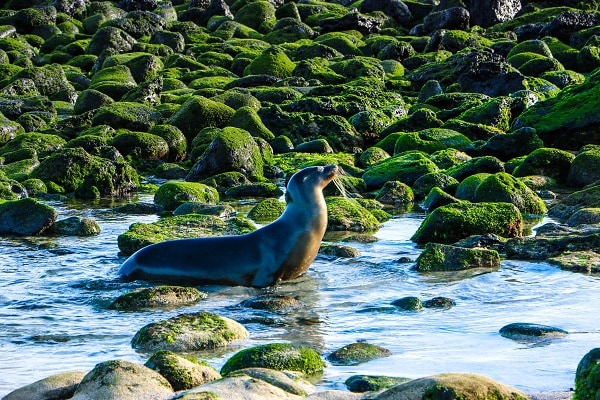 Galapagos Islands, Seal