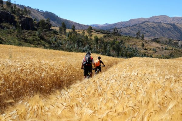 Mountain Biking - Sacred Valley