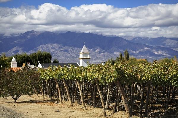 Vineyards - Cafayate
