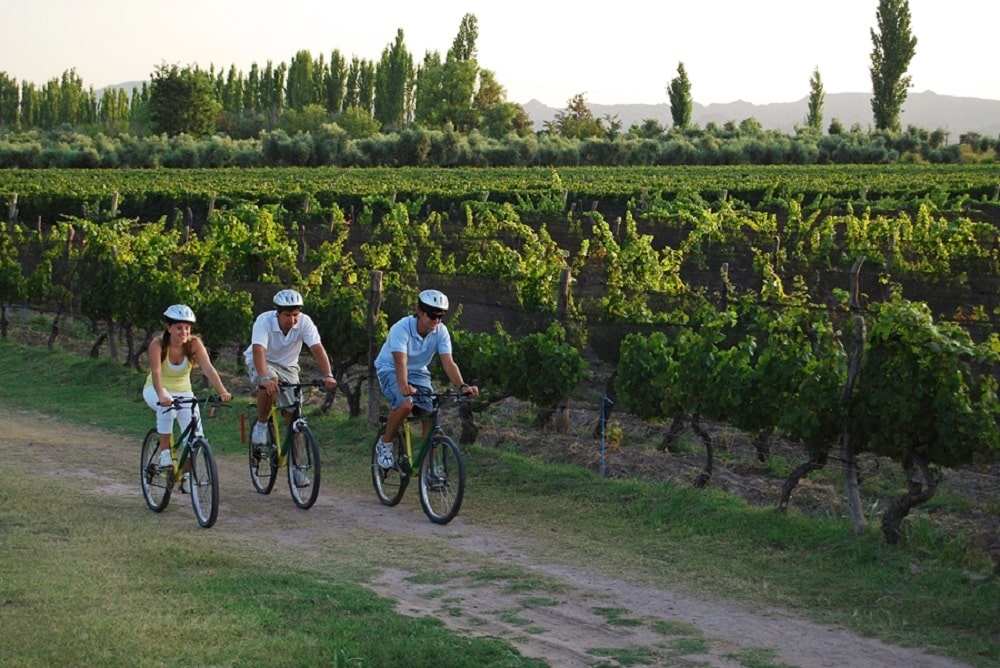 3 mountain bikers riding next to vineyards