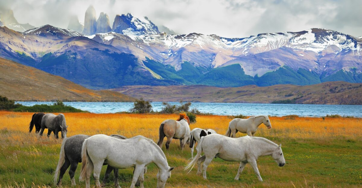 Discovering Patagonia: Best Regions to Visit in Chile & Argentina