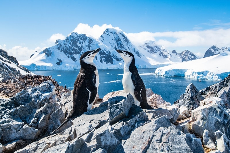 a pair of Chinstrap penguins sat on rocks overlooking the sea in the background