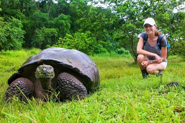 Giant Galapagos Tortoise - Santa Cruz Island