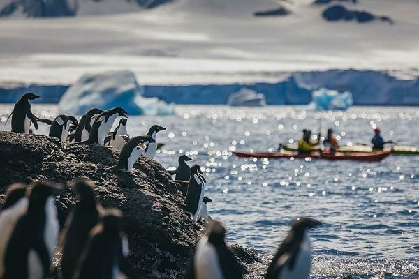 Kayak to Penguin Rookeries